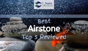 Fish in front of Bubbles from Airstone for Aquarium