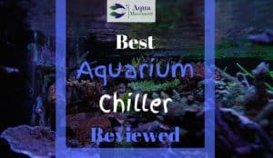 Image of Reef Tank with Best Aquarium Chiller Reviewed lettering
