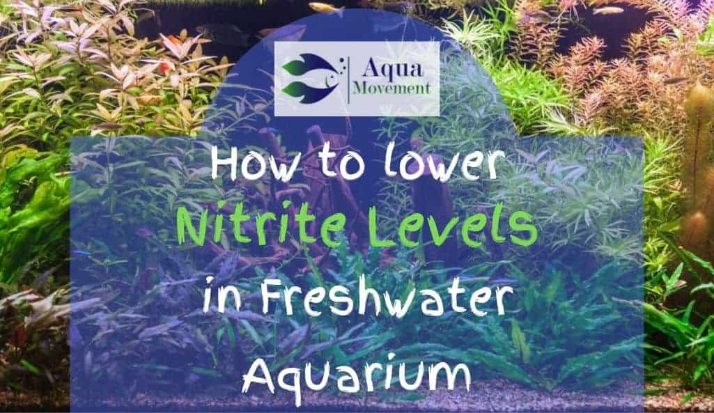 Aquarium with how to lower nitrite levels in freshwater aquarium lettering