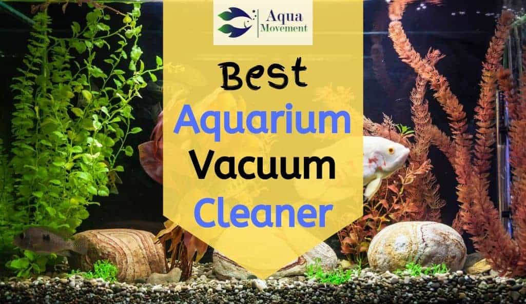 Aquarium with gravel cleaned from one of the best vacuum cleaner