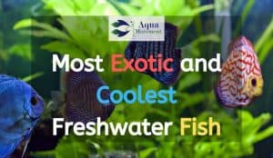 A group of Exotic Freshwater Fish