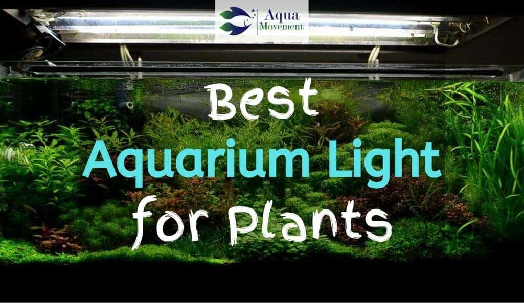 Aquarium with many different plants in it and aquarium light on top