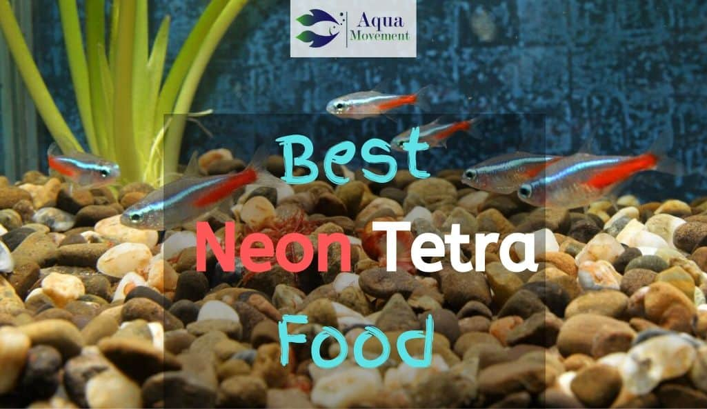 "Aquarium with ""Best Neon Tetra Food"" text overlay"