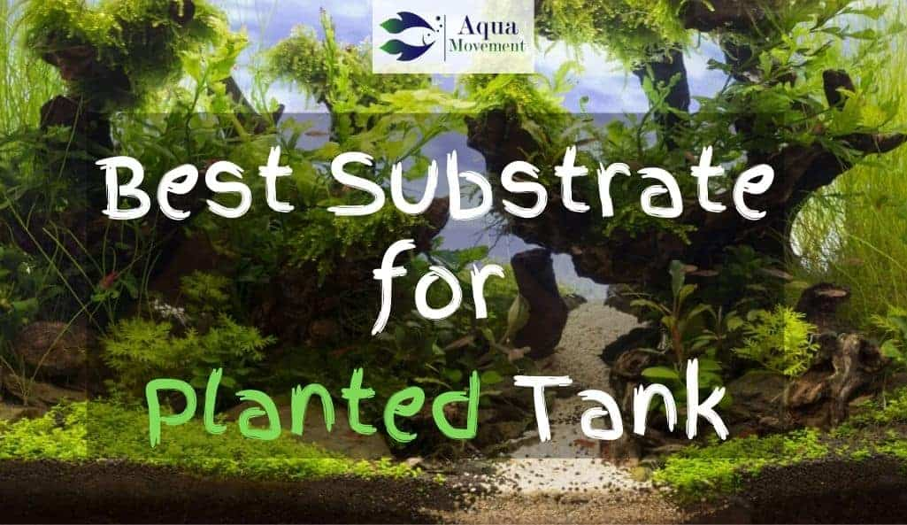 Planted Tank with white and black substrate