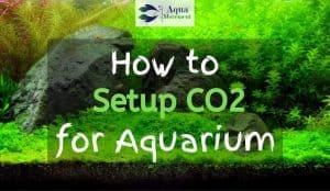 "Image from Planted Tank with ""How to Setup CO2 for Aquarium"" text overlay"