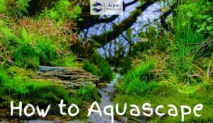 Aquascape in freshwater Aquarium