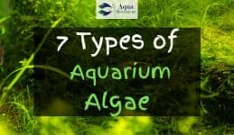 Aquarium with plants and algae