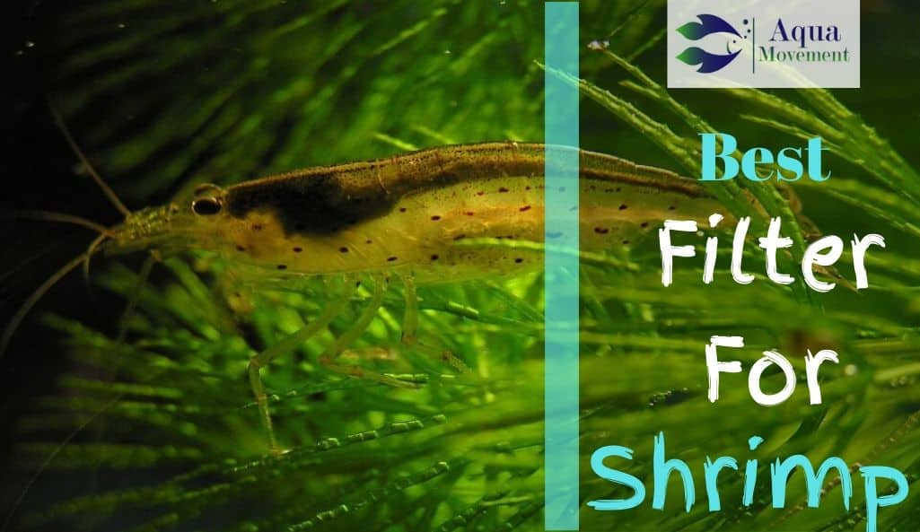 Shrimp walking over a Plant in a Shrimp Tank with filtered water