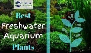 Freshwater Aquarium with a lot of Plants inside