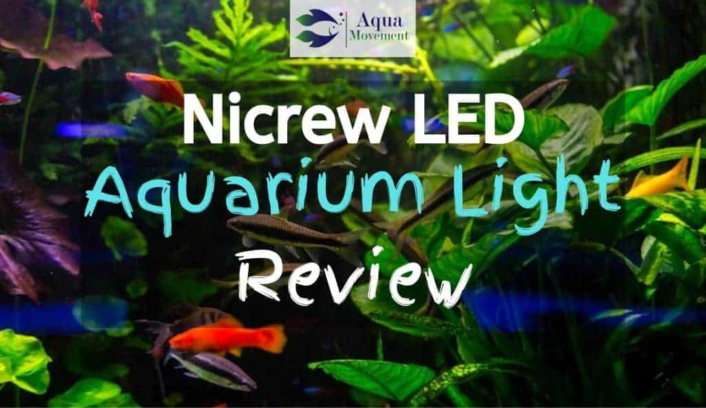 Aquarium with fish and plants growing from nicrew led