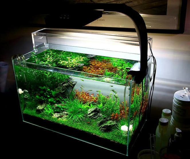 aquarium with plants inside