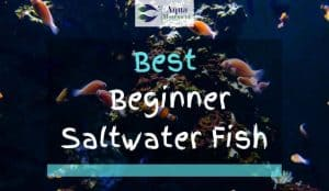 Beginner Saltwater Fish with coral reef in Aquarium