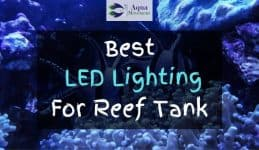 Reef Tank with LED lighting