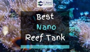 Nano reef tank with Clown Fish inside