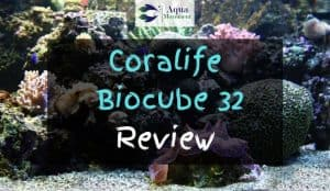 Coralife Biocube 32 with Corals inside