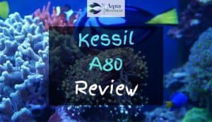 Saltwater Tank with Kessil A80 Light