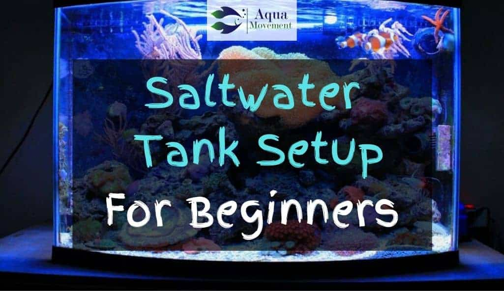 Saltwater Tank Setup with Corals and Fish