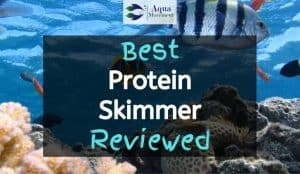 Saltwater Aquarium cleaned with one of the best protein skimmer