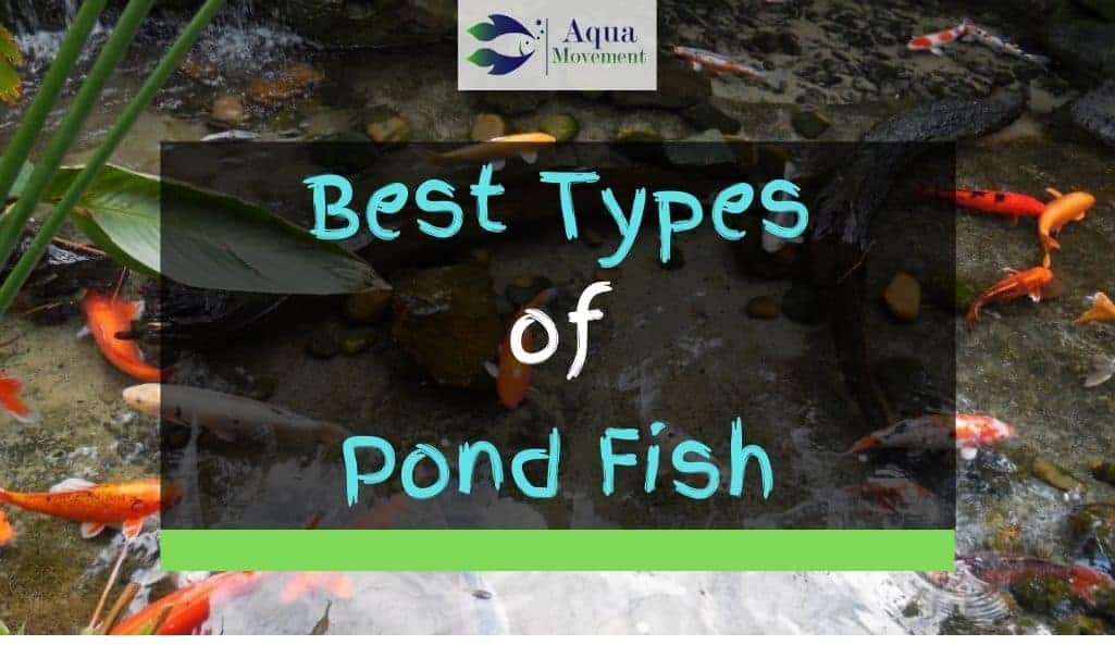 Pond with different types of fish inside