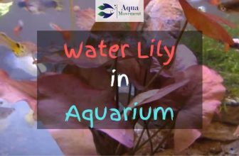 Water lily plant in aquarium