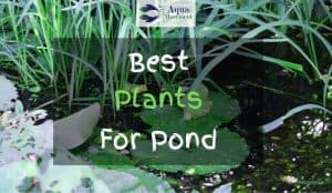 Plants in a pond