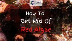 Red algae in saltwater