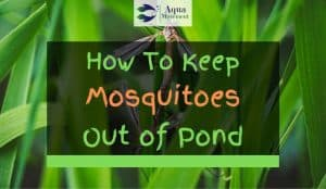 Mosquitoes in pond