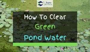 Pond with greeen water