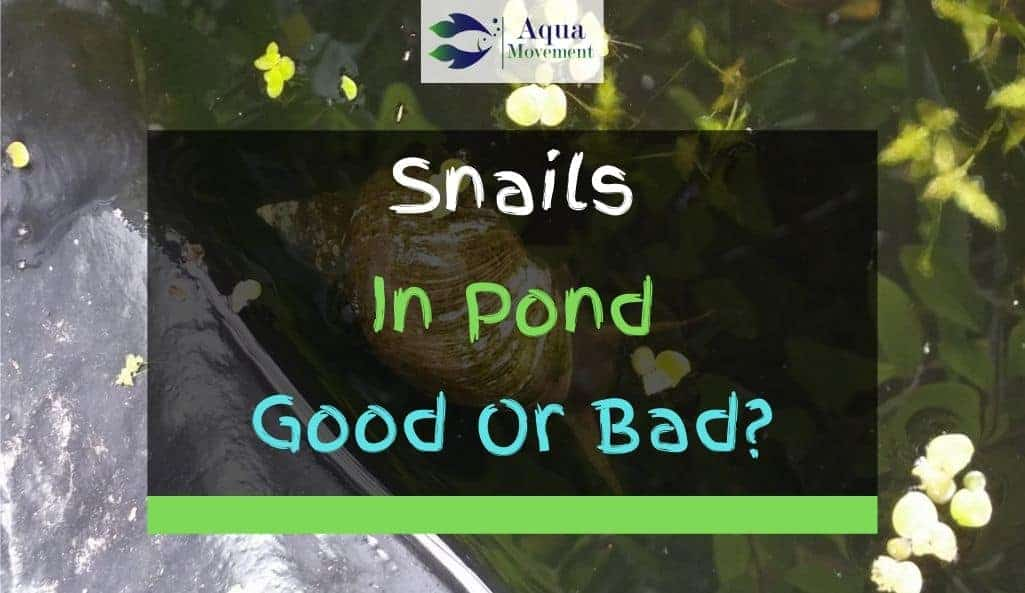 Snail in a pond