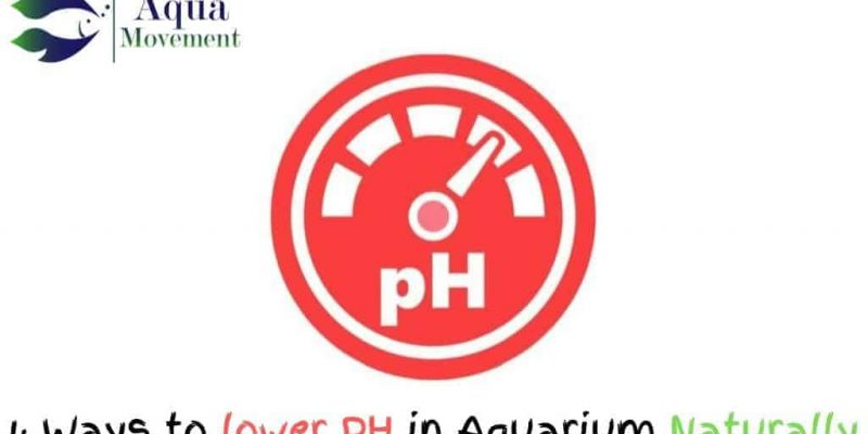 How to Lower PH in Freshwater Aquarium Naturally