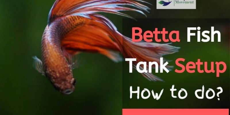 Betta Fish Tank Setup. How to do? All Answers here