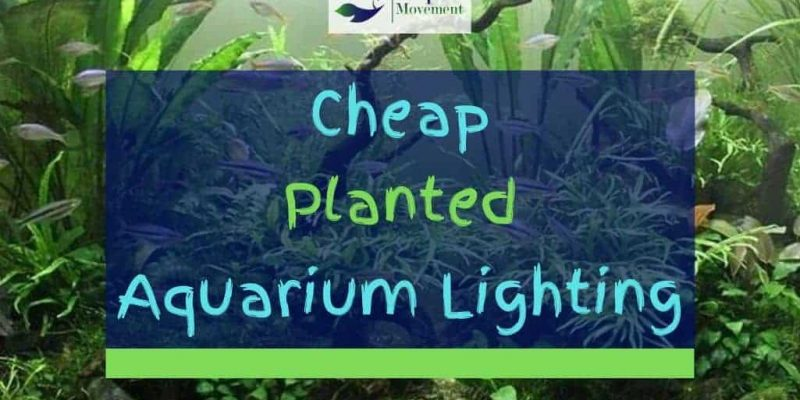 Cheap Planted Aquarium Lighting – Top 5 Budget LEDs Reviewed