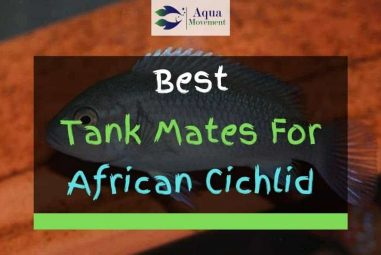 13 Best African Cichlid Tank Mates With Pictures
