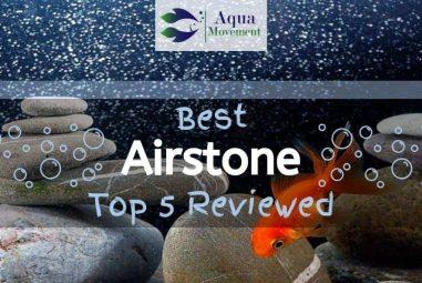 Best Airstone for Aquarium in 2021! Let it Bubble