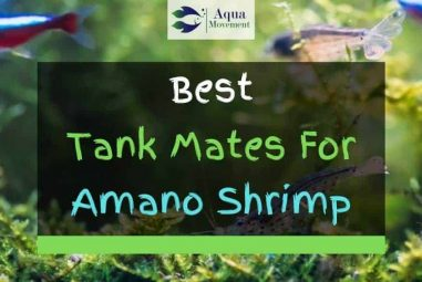 13 Best Amano Shrimp Tank Mates (With Pictures)