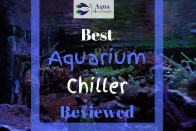Best Aquarium Chiller for Freshwater, Saltwater, and Reef Tank (2021 Reviews)