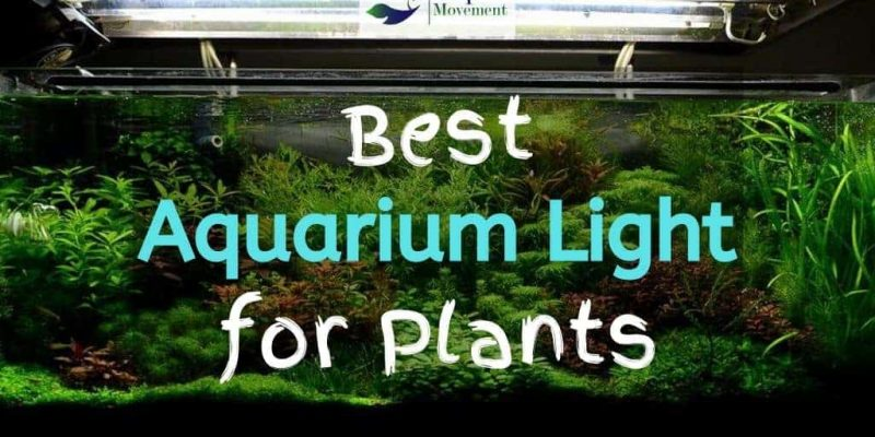 10 Best Aquarium Light For Plants Reviewed