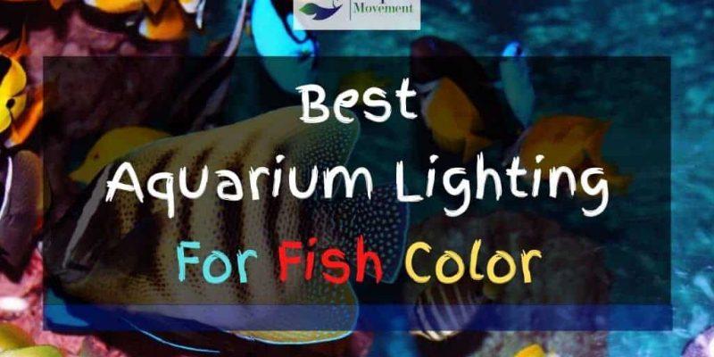 Best Aquarium Lighting for Fish Color