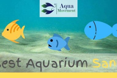 Best Aquarium Sand for Freshwater and Saltwater Reviewed