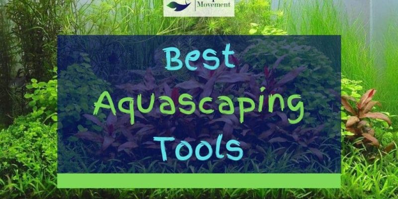5 Best Aquascaping Tools and Kits