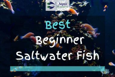 20 Best Saltwater Fish For Beginners (With Pictures)
