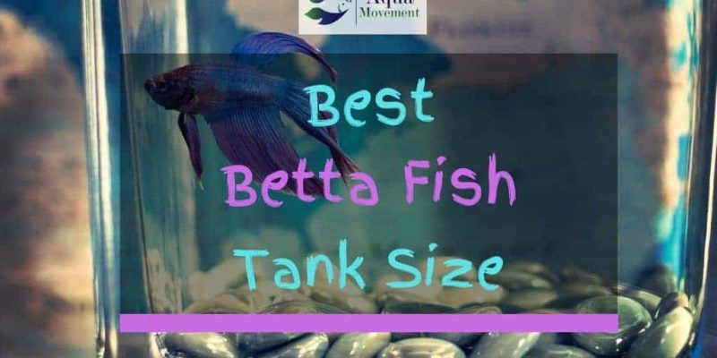 What Is The Best Betta Fish Tank Size?