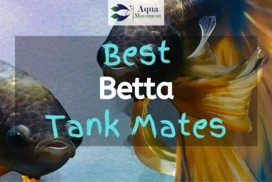 20 Best Betta Tank Mates with Pictures
