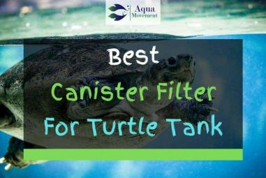 9 Best Canister Filter For Turtle Tanks In 2021