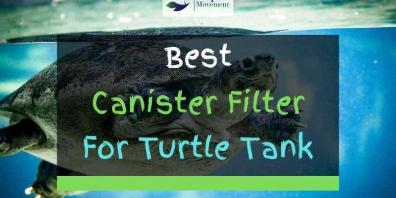 9 Best Canister Filter For Turtle Tank In 2021