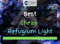 4 Best Cheap Refugium Lights Reviewed