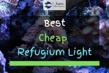 4 Best Cheap Refugium Lights Reviewed