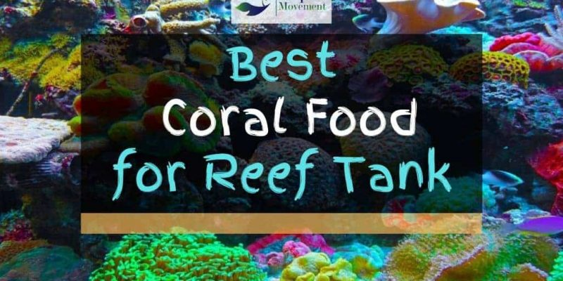 Best Coral Food for LPS SPS and Soft Corals