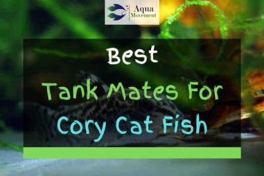 11 Best Cory Catfish Tank Mates (With Pictures)