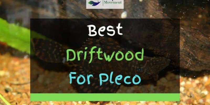 4 Best Driftwoods For Plecos Reviewed